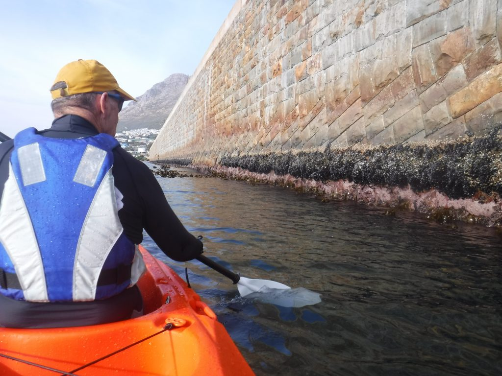 paddle experience - kevin modelling the laslizas lifejacket while paddling alongside the simon's town harbour wall.