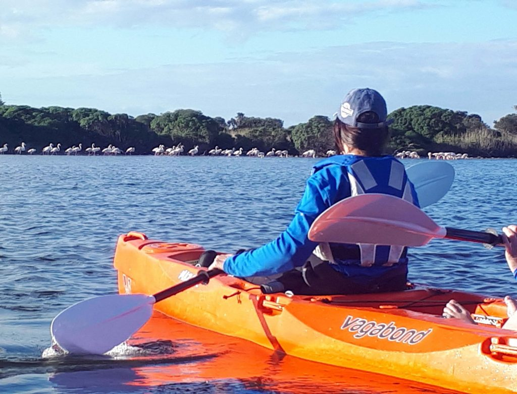 paddle experience - the peaceful waters of Zandvlei Estuary Nature Reserve, approaching a colourful flock of flamingos.
